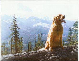 Photo: Carl's Golden Retriever, Tory, with Mt. Hood in background